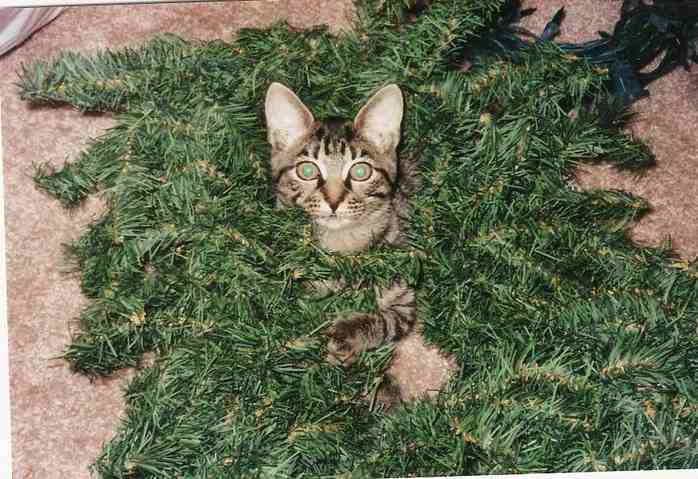 Pet Organics No Scratch Spray For Cats